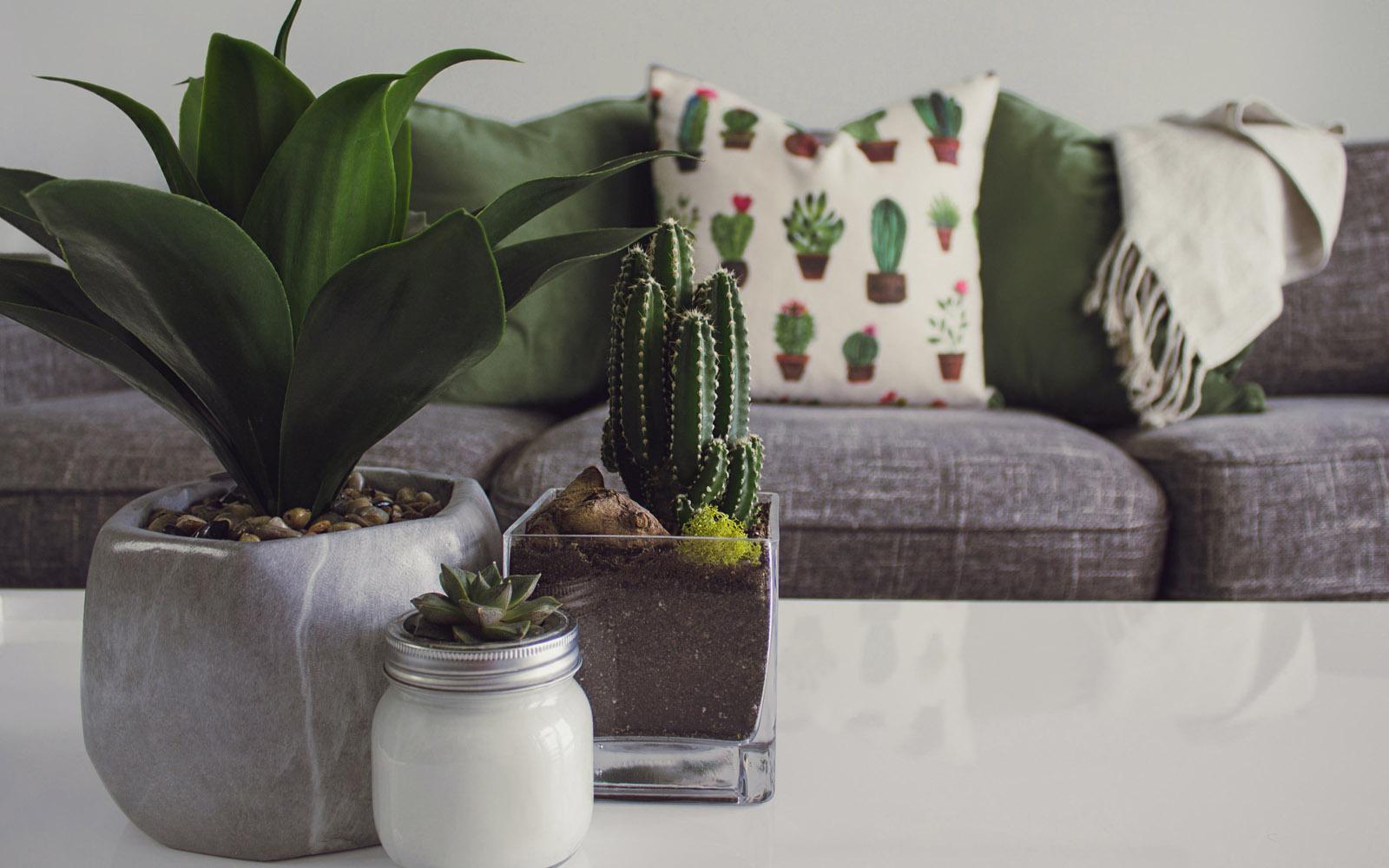 Piante Da Appartamento Ambiente Buio i superpoteri delle piante da appartamento | oltreilbalcone