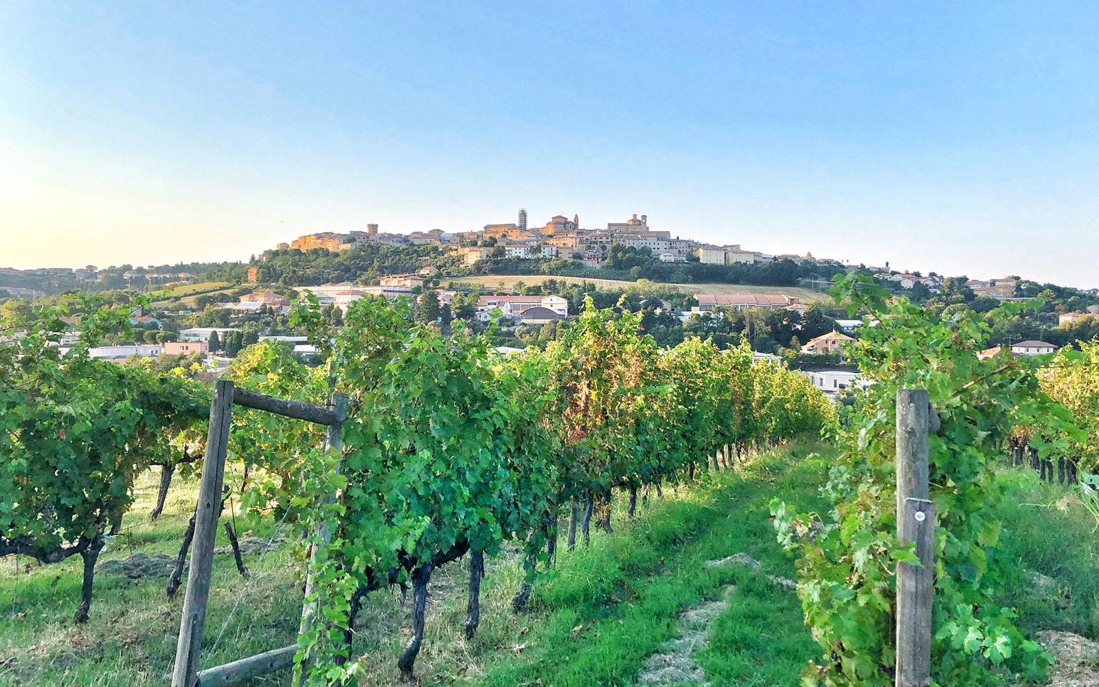 I vigneti della Locanda Fontezoppa e la veduta su Civitanova Alta.