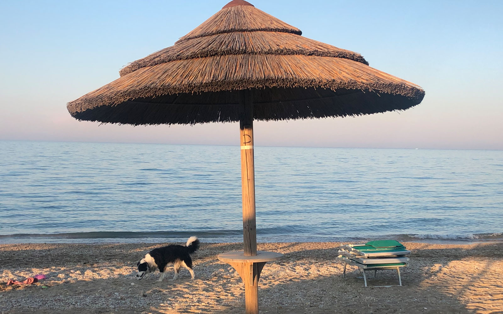 La spiaggia dog-friendly VirgolaZero1 di Civitanova Marche.