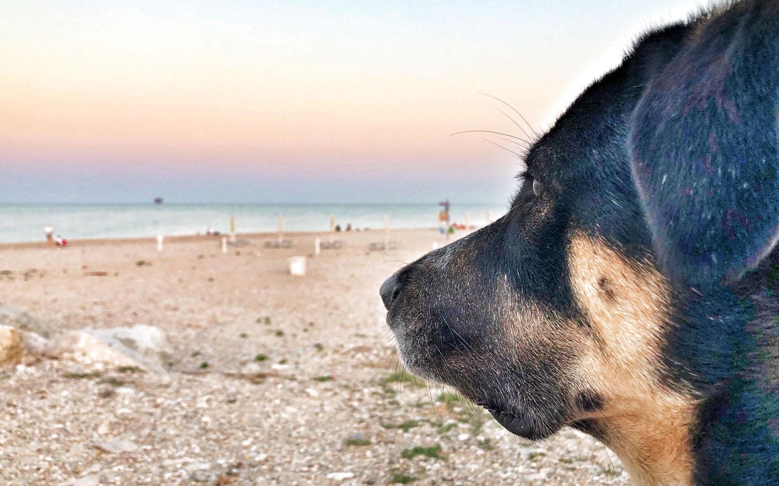 Il mio cane Pastis ammira la spiaggia di Civitanova Marche al tramonto.