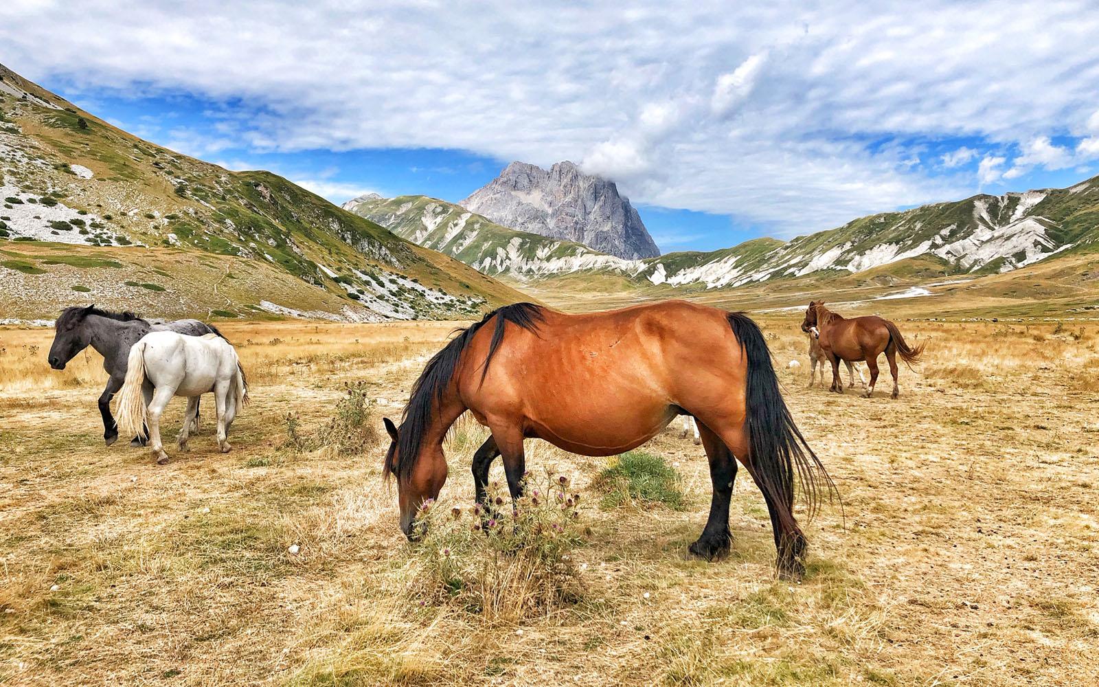 Cavalli a Campo Imperatore, nel Parco del Gran Sasso in Abruzzo.