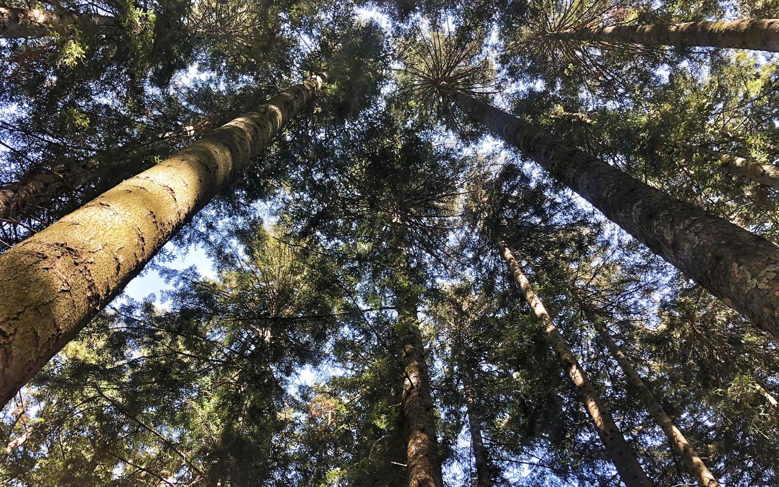 Uno scorcio del Parco Foreste Casentinesi Nazionale. © oltreilbalcone