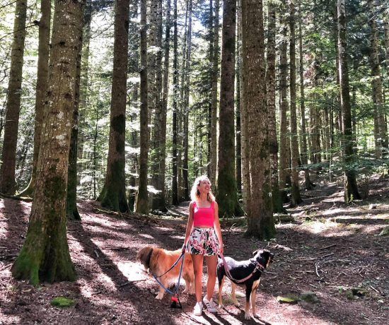 Foreste Casentinesi con cani © oltreilbalcone