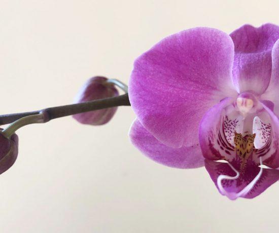 Orchidea © oltreilbalcone
