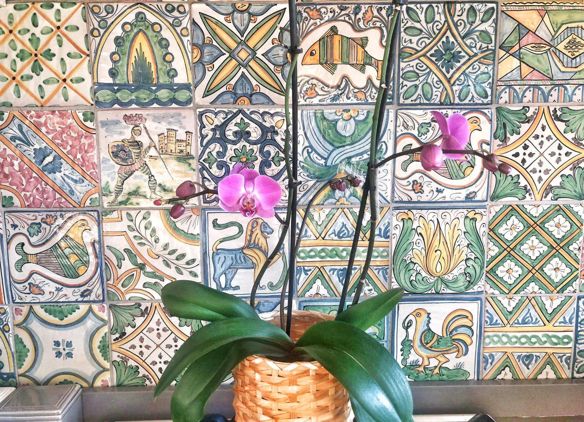 La mia orchidea, specie Phalaenopsis. © oltreilbalcone