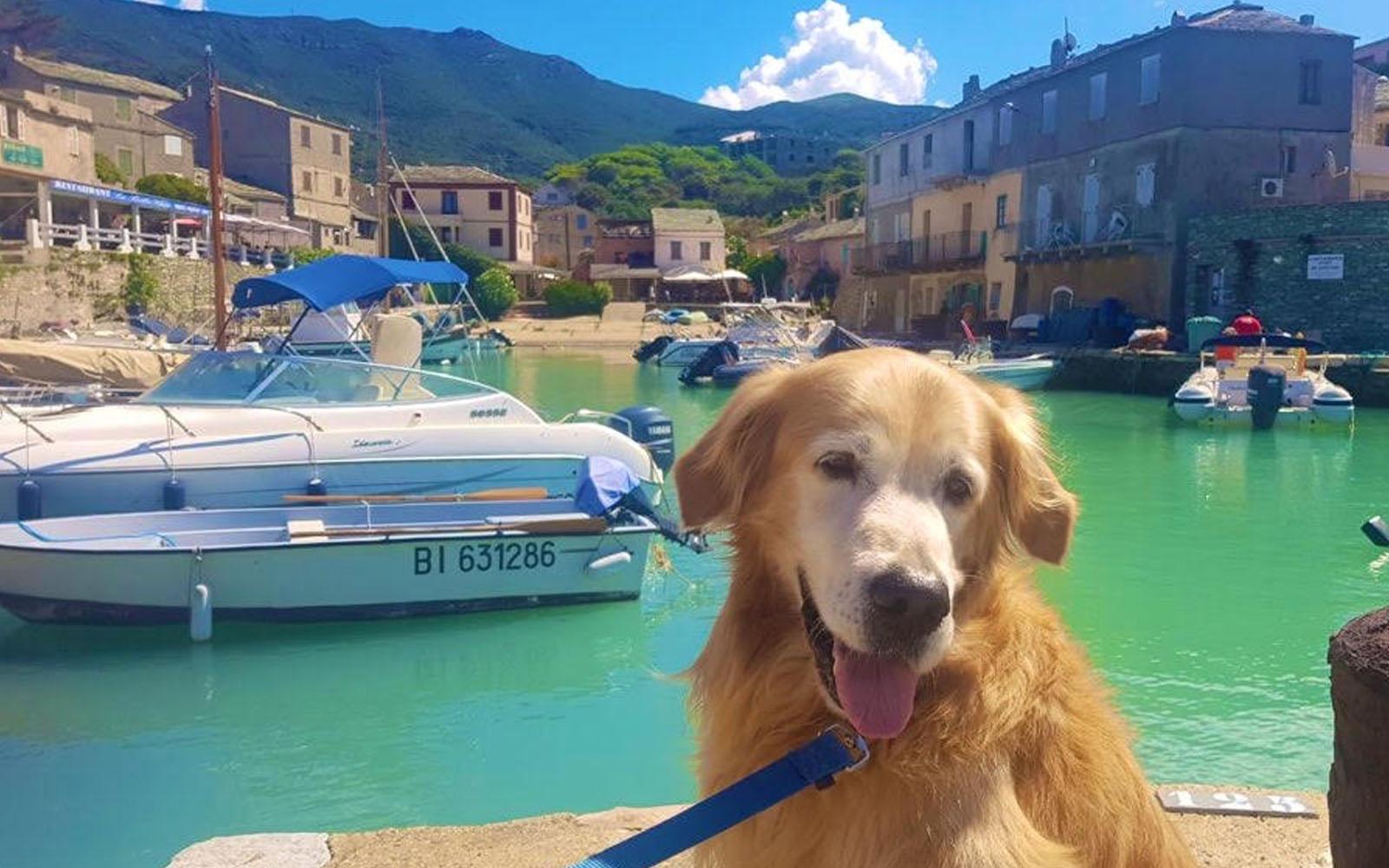 Il mio cane Felakuti davanti al molo di Centuri, il borgo delle aragoste. © oltreilbalcone