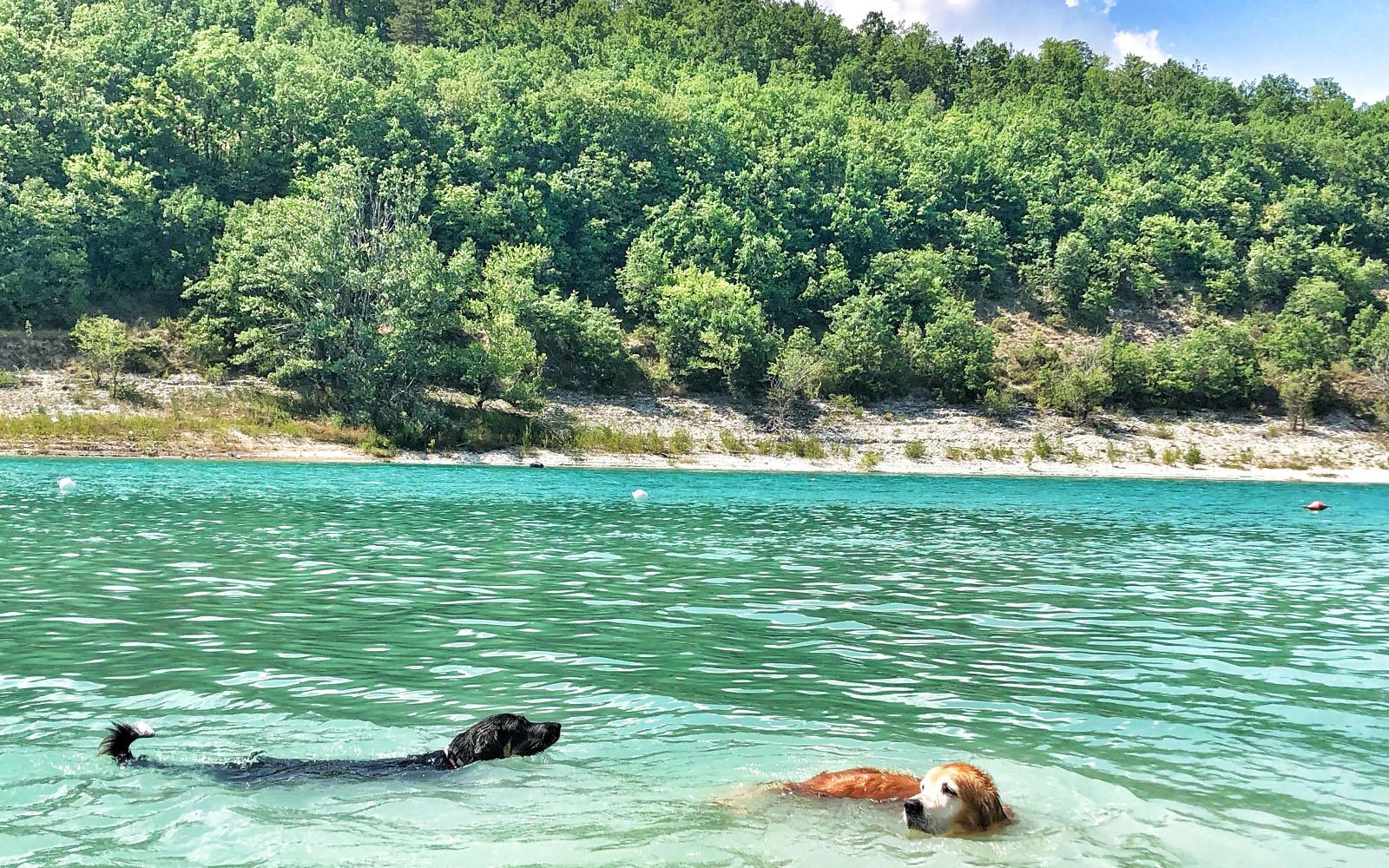 I miei cani, Pastis e Felakuti, nel lago di Fiastra. © oltreilbalcone