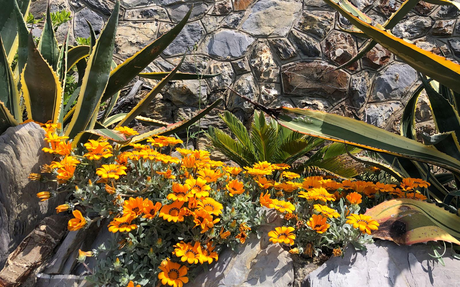 Fiori nei Parchi di Nervi. © oltreilbalcone