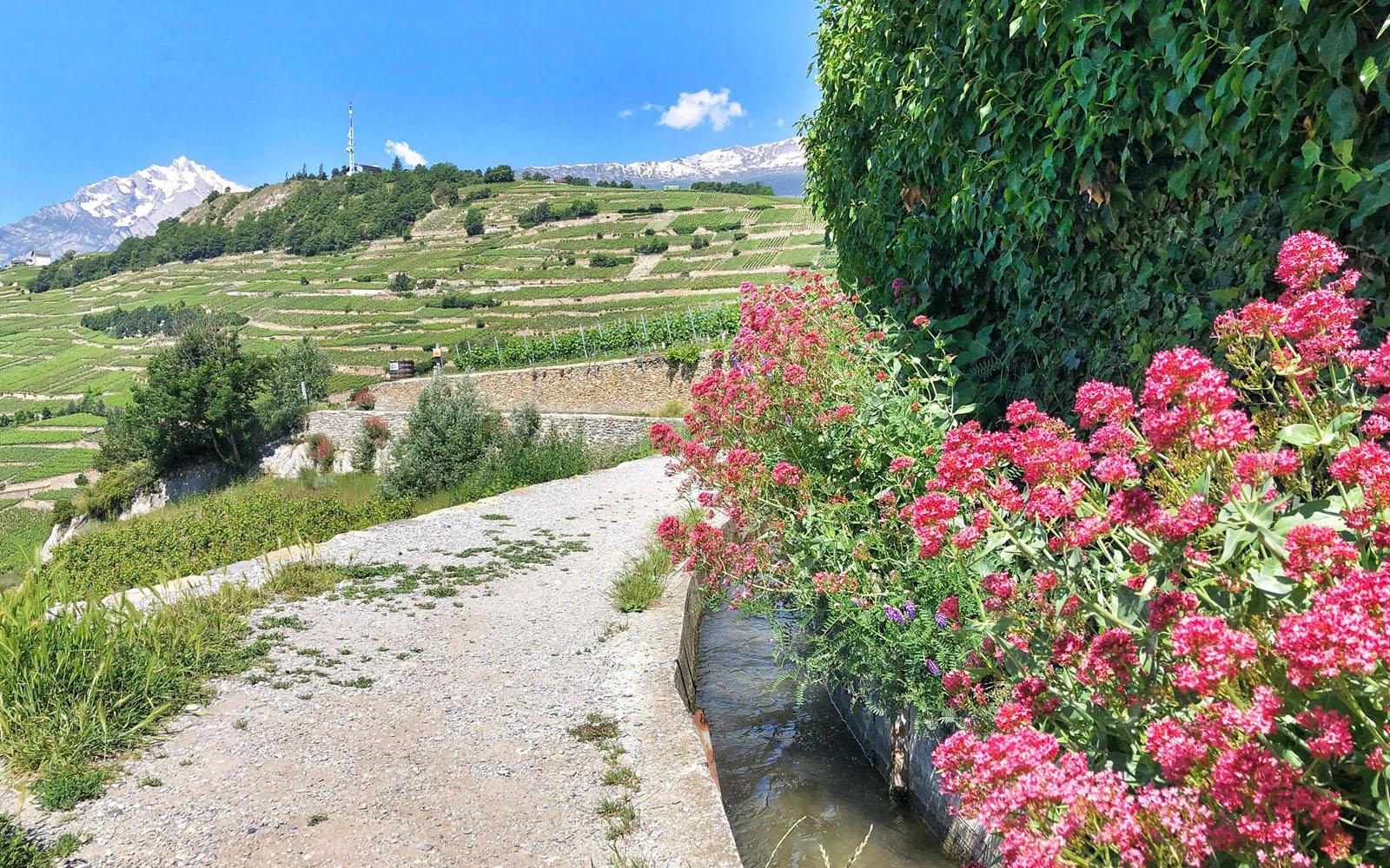 Il percorso di trekking lungo le 'bisse' di Sion, tra i vigneti. © oltreilbalcone