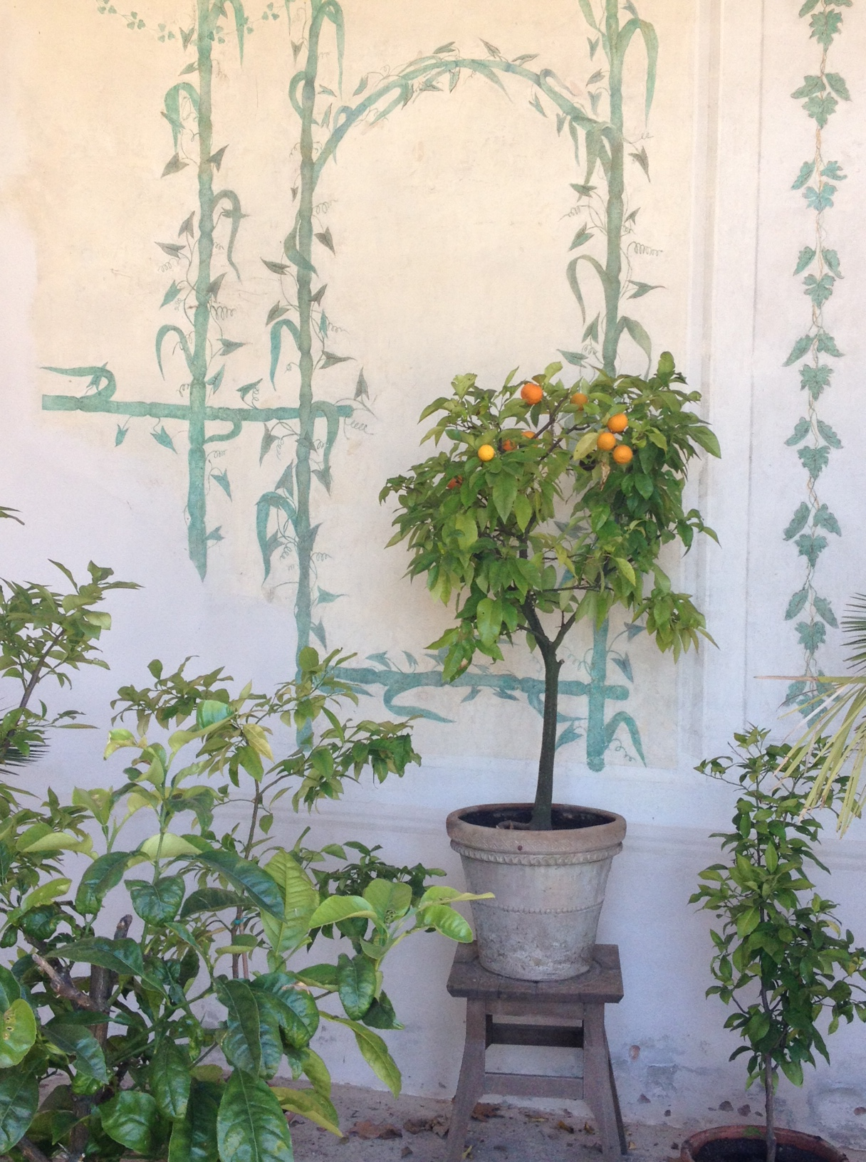 Orangerie e motivi vegetali @oltreilbalcone