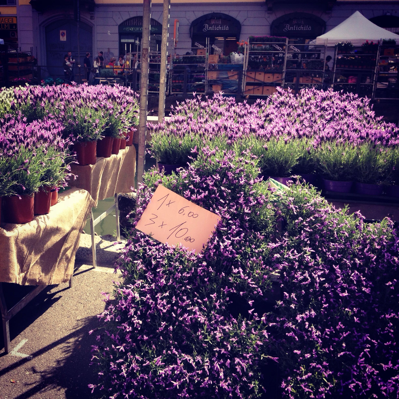 Uno stand con piante di lavanda alla Festa dei Fiori sui Navigli di Milano.