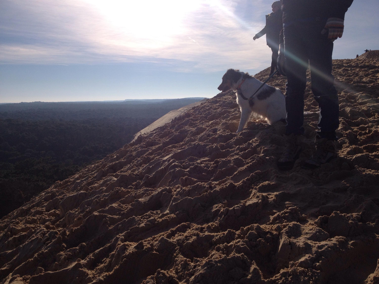 Un cane guarda verso il basso, dalla Dune du Pilat.