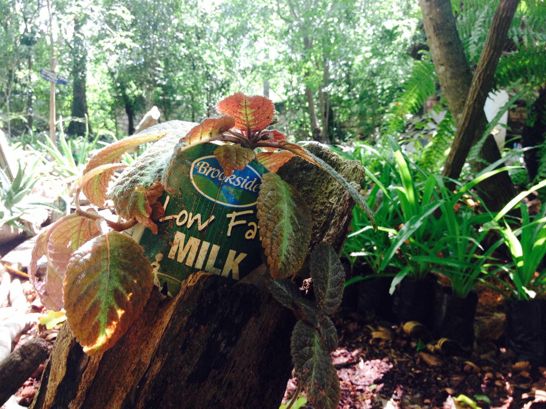 Pianta con vaso ottenuto da materiali di riciclo nel Giardino Botanico. © oltreilbalcone