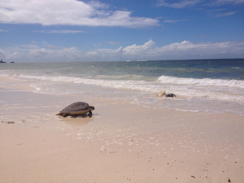 La tartaruga che ho avuto l'opportunità di liberare in mare. © oltreilbalcone