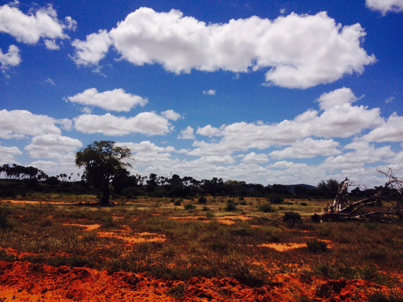La tipica terra rossa dello Tsavo National Park.