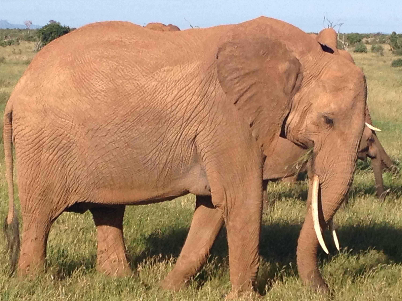 Un elefante ammirato ad una distanza molto ravvicinata.