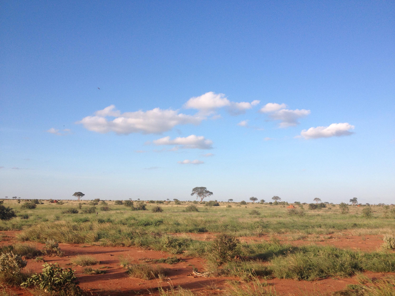 Il parco dello Tsavo, in Kenya.