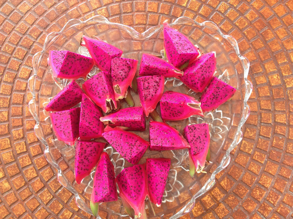 Dragon fruit @oltreilbalcone
