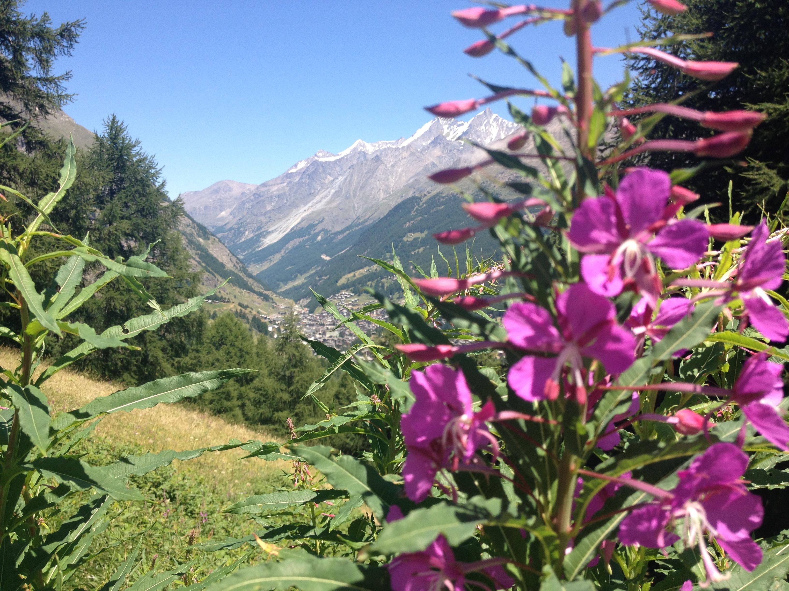 Zermatt, Vallese @oltreilbalcone