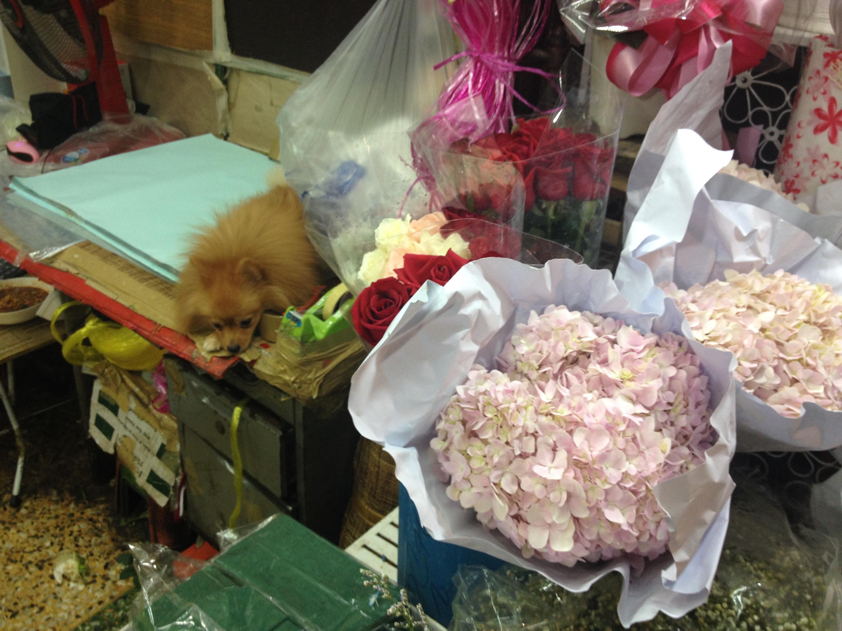 Mercato dei fiori @oltreilbalcone